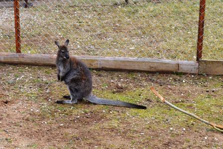 8 Mini zoo Ranco_450